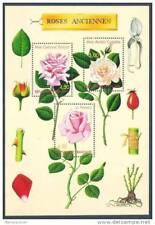 Bloc N° 24, les roses
