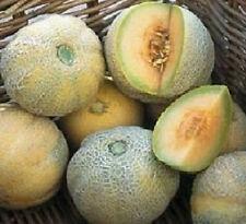 100 Cantaloupe Seeds Minnesota Midget Small Fruit