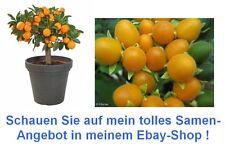 jetzt noch sparen beim Samenkauf - Obst-Set - Orangenbäumchen und Samtpfirsisch