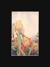 Tulip Flowers 1913 Detmold Print Chromolithograph Print  ANTIQUE