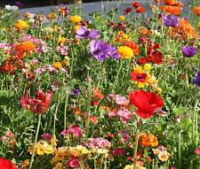 500 pcs Wildflower 'Fast growing Mixed' flower seeds #W01