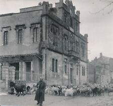 SAINT-GILLES c. 1947 - Transhumance en Camargue Hôtel de Ville Gard - Div 10909