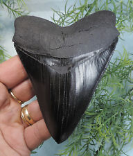 SERRATED 4 7/16'' LONG MEGALODON TOOTH REPLICA,NEW!,99.99%PERFECT!/FOSSIL SHARKS