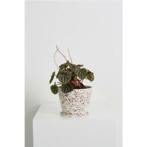 NEW Capra Designs Modern Resin Terrazzo Plant Flower Succulent Pot Home Decor
