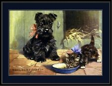 English Print Scottish Terrier Puppy Dog Cat Picture