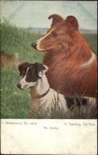 Collie & Fox Terrier Dogs Au Champ by H. Sperling Russian Issued Postcard