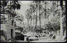 Glass Magic Lantern Slide OASIS AT TOZEUR C1910 PHOTO TUNISIA