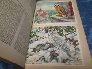 Das Tierreich I , Sammelbilderalbum , VOSS  Kunstbilder , Margarine Reklame / B