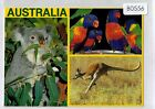 B0556ryt Australia Animals and Birds Multiview postcard