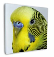 More details for yellow budgerigar, budgie 12