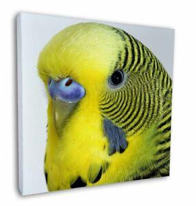 "Yellow Budgerigar, Budgie 12""x12"" Canvas Wall Art Picture Print, Bird AB-51-C12"