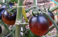 Indigo Cherry Drops Tomato - A Rare Blue Coloured Cherry Tomato - 10 Seeds!!!