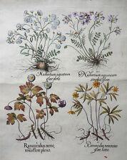 NASTURTIUM AQUATICUM RANUNKEL KRESSE HAHNENFUSS RANUNCULUS BESLER KOLORIERT 1613