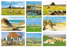BR86085 mooi texel netherlands sheep mouton