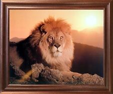 Lion King (Sunset) Big Cat Wild Animal Mahogany Framed Wall Decor Picture 18x22
