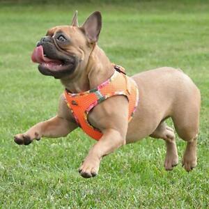 American River  Orange Choke Free Dog Harness Hawaiian Trim XXS-3XL