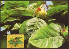 CYPRUS 2006 FRUITS ISSUE-MESPILUS GERMANICA (ROSE FAMILY) (FOOD) MAXIMUM CARD