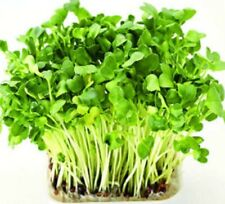 "Water Cress Nasturtium officinale 2000 seeds+4"" FREE REUSABLE PLANT LABEL"