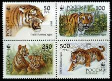 Russia: 1993 WWF Tigers Block of Fouf (6181a) MNH