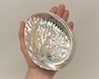 "Stunning Large LIGHT Abalone Shell 5-6"": Smudging Sage Sticks Display Sea Shell"