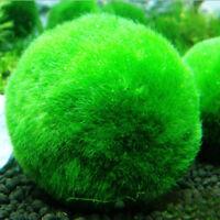3-5cm Marimo Moss Ball Cladophora Aquarium Pflanze Fisch Gesundheit Tank Dekor