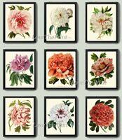 Unframed Botanical Print Set 9 Prints Antique Beautiful Peony Flowers Wall Art