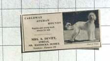 1950 Carloway Afghan Hounds Mrs Devitt Streat Near Hassocks