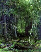 Russian Impressionist Ivan Shishkin Pine Forest Oil Painting Print on CANVAS SM