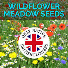 More details for wildflower seeds wild flowers garden bee scented meadow flower pack mix seed