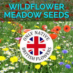 Wildflower Seeds Wild Flowers Garden Bee Scented Meadow Flower Pack Mix Seed