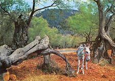 Bg35403 mallorca olivons milenarios donkey spain