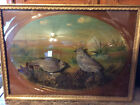 Antique (100 year old) Bubble-Glass *Taxidermy Quail Diorama* Museum Display