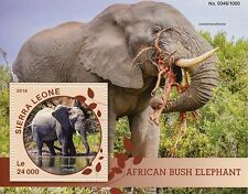 Sierra Leone 2016 MNH African Bush Elephant 1v S/S Wild Animals Elephants