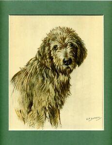 ~ Otterhound ~ Colour Print by K F Barker  Genuine Vintage 1938