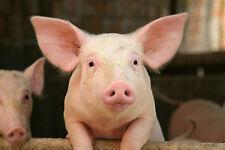 20 g  Amazon Pro Wurmkur / Entwurmung ohne Chemie, für Schweine