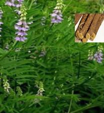 Planta del Regaliz de Palo - Glycyrrhiza glabra - Jardin  Medicinal 40 semillas