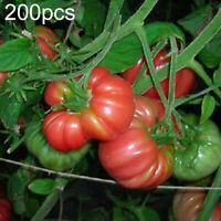 Blondkopfchen Organic Tomato Seeds aka Little Blonde Girl High Yielding!!!