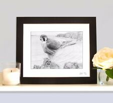 PEREGRINE FALCON Art Print Signed MOUNTED Picture Present Gift For Birdwatcher