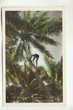 Color Real Photo Postcard Climbing for Coconuts Hawaiian Islands HI  113