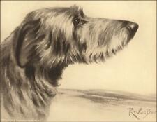 Scottish Deerhound Dog by Reuben Ward Binks, vintage print authentic 1935
