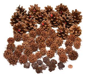 Muwse Deko Zapfen Set (70 teilig) Natur trocken sauber Weihnachts- Adventdeko