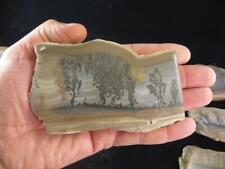 S.V.F - Cotham Marble -Fossil Stromatolite Section  - Polished