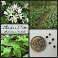 20+ WILD GARLIC SEEDS (Allium ursinum) Herb Edible Medicinal Ramsons Bear Garlic