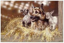 GERMAN SHEPHERD DOG ALSATIAN GSD FINE ART LIMITED EDITION PRINT - by Paul Doyle