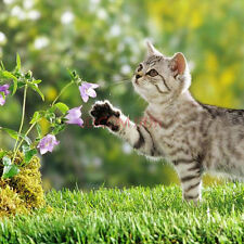 1 Pack 400 Catnip Seeds Catmint Nepeta Cataria Cat Spearmint Organic Seeds S017