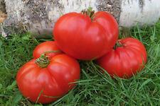 10 graines de tomate rare Big Zac une variété de concours heirloom méth.bio