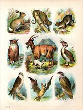 ANTIQUE BIBLE COLOUR PLATES - PELICAN, GOAT, OWL, BAT. HARE, VULTURE & CHAMELEON