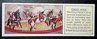 CIRCUS HORSES     Original 1930's Vintage Card # VGC