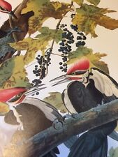 Pileated Woodpecker Audubon Bookplate Bird Print Picture Poster