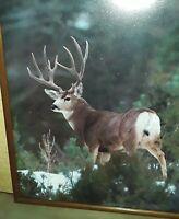 Nice Large Glass Framed Point Buck Deer Winter Scene Nature Man Cave Gift Idea